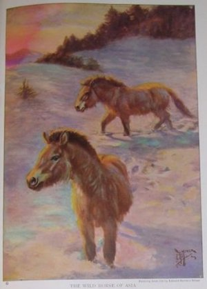 1923 WILD HORSE OF ASIA PRINT by Edward H MINER Plate-1