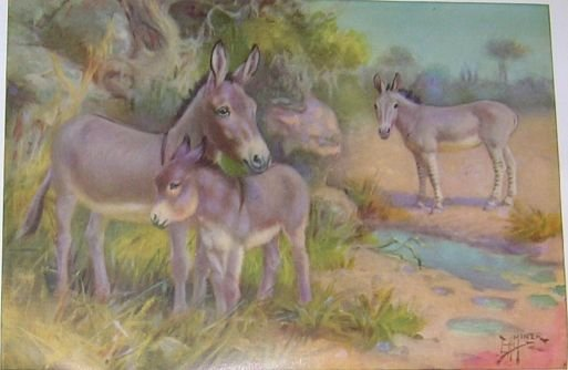 1923 WILD ASSES (HORSE) PRINT by EDWARD H MINER Pl-6