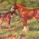 1923 CLYDESDALE HORSE PRINT by EDW H MINER Pl-15
