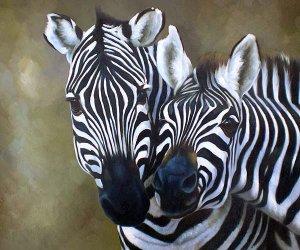 "Burchell Zebras Loving Moment 20"" x 24"" Original Oil"