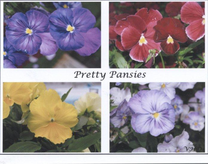 Pretty Pansies