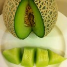 Japanes Musk melon 10 Green heirloom Fruit seeds