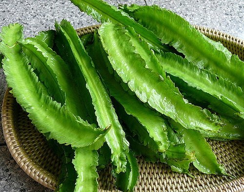 Winged Bean 20 seeds Heirloom Thai vegetable