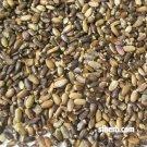 Milk Thistle Seed - 1 Lb