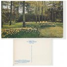 Sussex Postcard Daffodils in Sheffield Park. Mauritron #309