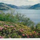 Rhododendrons by Loch Broom Postcard. Mauritron PC351-213543