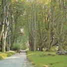 Grand Avenue Savernake Marlborough Postcard. Mauritron PC445-213840