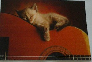 Cute Sleepy Kitten kitty cat 4x6 photo card Animals