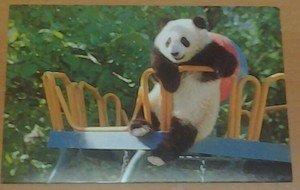 Cute Panda bear on the Playground 4x6 glossy photo card Animals