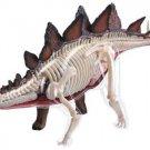 Model: Dinosaur 3D Stegosaurus Anatomy