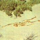 "Novelty- Nevada ""Desert Tragedy"" Skeleton Postcard"