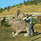 "Novelty- 1963 ""Big Jack Rabbit"" Postcard"