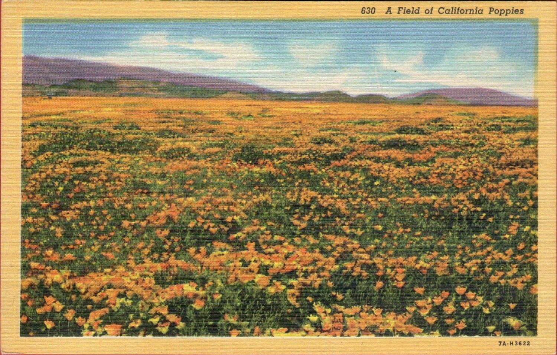 "Scenic- C.T. Art ""A Field of California Poppies"" Linen Postcard"
