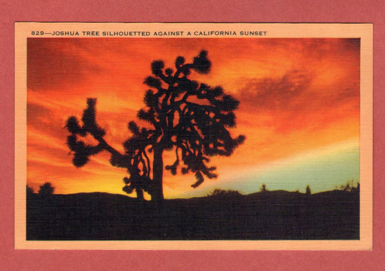 "Scenic- Longshaw Card Co. ""Joshua Tree Silhouetted Against A California Senset'"