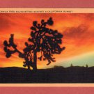 "Scenic- Longshaw Card Co. ""Joshua Tree Silhouetted Against A California Senset'"
