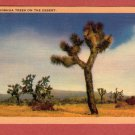 "Scenic- Longshaw Card Co. ""Joshua Trees On The Desert"" Linen Postcard"