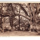 New Forest The Knightwood Oak Postcard. Mauritron 220731