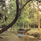 Ornamental Drive New Forest Brockenhurst Postcard. Mauritron 248435
