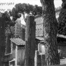 """Column, column, tree""  Ruins in Rome, Italy"