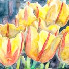 Yellow Tulips- watercolor on Yupo