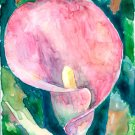 Pink Calla Lily- watercolor on Yupo