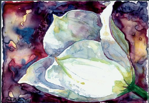 White Tulip- watercolor on Yupo