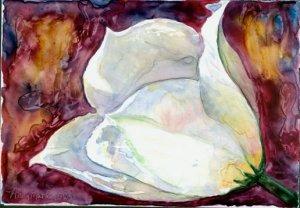 White Tulip #2- watercolor on Yupo