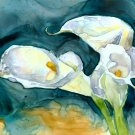 Calla Lilies on Blue2- Reproduction, Signed Open Edition