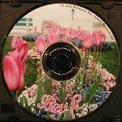 Overeaters Anonymous 12 Step Speaker CD -  Bev C.