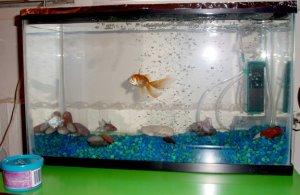 fish aquarium- fully loaded