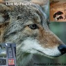 how to call coyotes with electronic caller