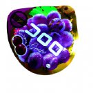 Cororo 100% Juice Grape Texture Gummy- Japan Candy