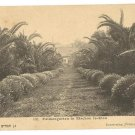 PALM TREE GARDEN IN RISHON LEZION BERLIN PC CA 1900'S