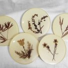 FLOWERS OF ISRAEL* BEER TEA COASTERS 1960'S RARE