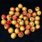 20 Apples Gara Apple Fruit Fruits Red Yellow Tiny Food Clay Fimo Miniature Dollhouse Jewelry Beads