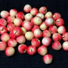 20 Apples Fuji Apple Fruit Fruits Red White Tiny Food Clay Fimo Miniature Dollhouse Jewelry Beads