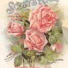 Scotts Roses Tin Sign #575