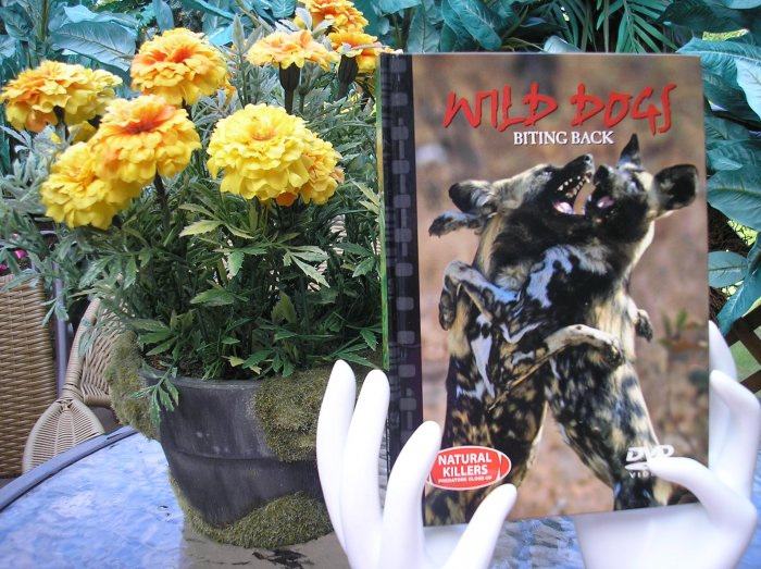 NATURAL KILLERS - PREDATORS CLOSE-UP Series: WILD DOGS: BITING BACK DVD VIDEO and BOOK!