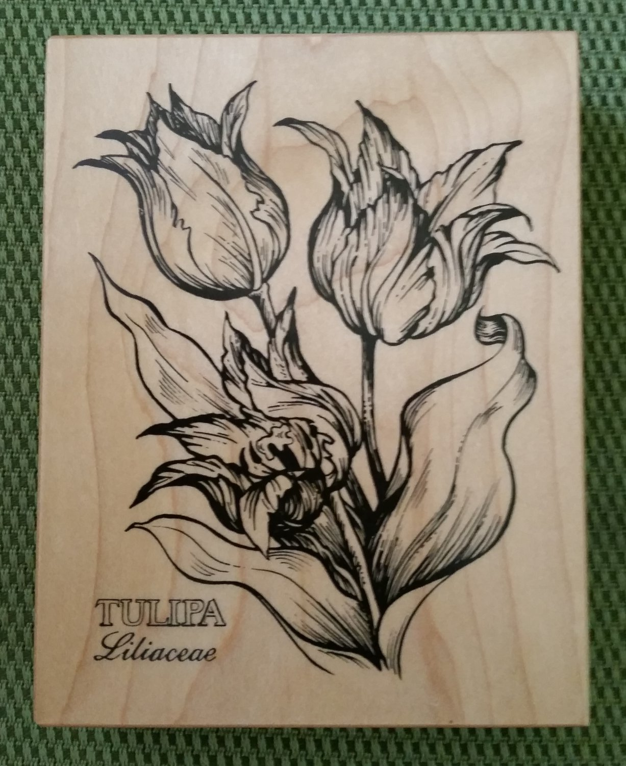 TULIPA/Tulips Liliaceae Flower Wood Mounted Rubber Stamp #K-622 by PSX-1993-MADE IN USA-RETIRED-NEW!