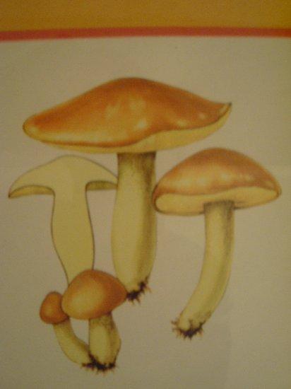 Art work by H.S for Sauder Inc (Subject) Mushrooms.