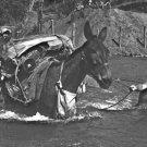 New 5x7 World War II Photo: 475th Infantry Regiment Lead Mules Across River