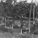 New 5x7 Civil War Photo: Battered Trees on Culp's Hill after Gettysburg Battle