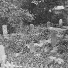 New 5x7 Civil War Photo: Sailor's Graves Killed in Federal Bombing, Hilton Head