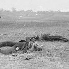 New 5x7 Civil War Photo: Confederates Where they Fell at Antietam - Sharpsburg
