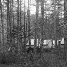 New 5x7 Civil War Photo: Federal Army Camp in Woods Near Culpeper, Virginia