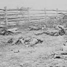 New 5x7 Civil War Photo: Soldiers Dead by Fence after Antietam - Sharpsburg
