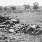 New 5x7 Civil War Photo: Dead in The Wheatfield after Battle of Gettysburg