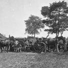 New 5x7 Civil War Photo: Blacksmith at Army HQ, Antietam - Sharpsburg