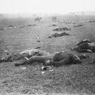 New 5x7 Civil War Photo: Incidents of War on the Gettysburg Battlefield