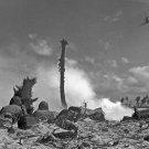 New 5x7 World War II Photo: Marines on Eniwetok Atoll, Marshall Islands